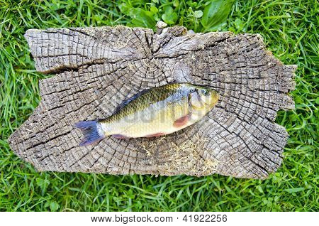 Crucian Carp (carassius Carassius) On Old Wooden Background