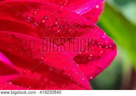 Vivid wet petals on bright sunlight with plenty tiny water droplets sparkling on summer sun.