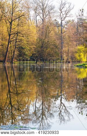 Calm Surface Of The Pond. Above The Surface Are The Branches Of A Tree. The Trees Are Reflected On T