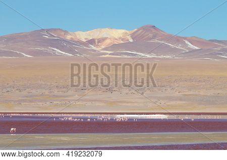 Laguna Colorada View, Bolivia