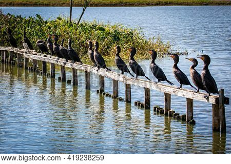 Group Of Cormorant Aquatic Birds Sitting On Bench