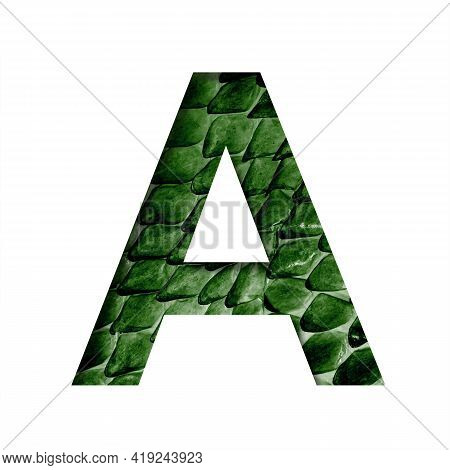 Dragon Skin Font. The Letter A Cut Out Of Paper On The Background Of The Dark Green Skin Of A Mystic