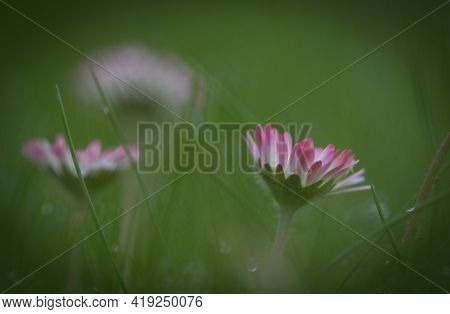 A Abstract Flower Closeup In Jena Thuringia