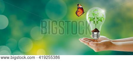 Human Hand Holding Plant Glowing In The Light Bulb With Butterfly On Green Background. Think Green,