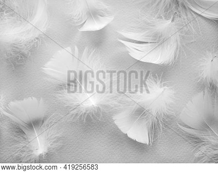 White Fluffy Bird Feathers. Beautiful Fog. A Message To The Angel. The Texture Of Delicate Feathers.