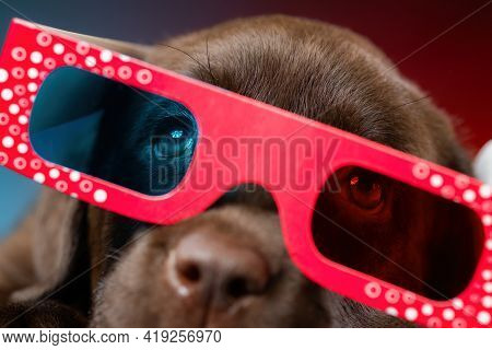 Close Up Image Of Labrador Retriever Puppy Watching Tv Or Movie Film  With 3d Glasses (red-blue Anag