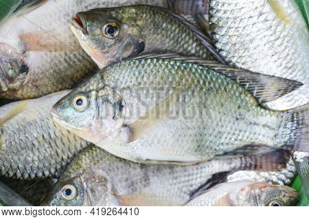 Tilapia Fish Freshwater For Cooking Food, Fresh Raw Tilapia Fish From Farm On Market Food
