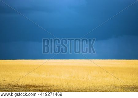 Thunderstorms With Heavy Rain Above Windswept Grasslands On A Prairie Taken At A Grassy Field In The