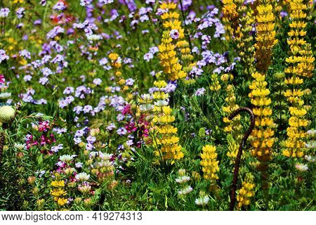 Colorful Wildflower Blossoms During Spring On A Lush Green Meadow Taken At A Grassy Field In The Rur