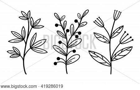 Set Of Vintage Vector Elements Branches With Leaves And Herbs. Hand-drawn Plants. Isolated Botanical