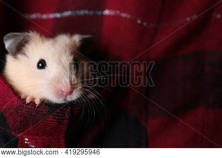 Cute Little Hamster In Pocket Of Red Flannel Shirt, Closeup. Space For Text