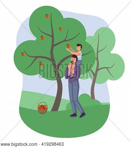 Dad And Son Picking Apples In The Garden, Vector Character. Orchard Harvesting Apples. Family Busine