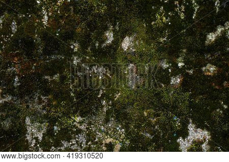 Texture Of The Stone With Moss. Background Green Moss On The Surface Of The Rock, On The Wall Surfac