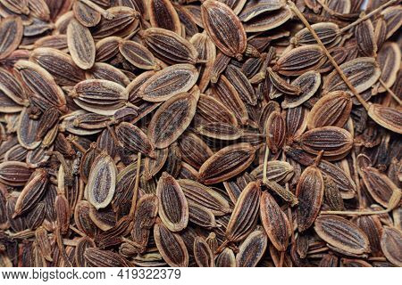 Macro Close-up Photo Of Superdukat Dill Seeds. Planting In The Garden And Vegetable Garden, Horticul