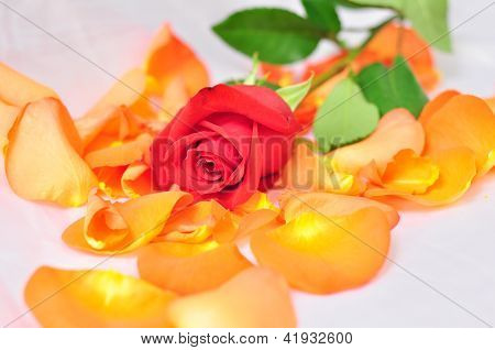 Red Rose On Orange Petals With Blurred Background