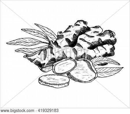 Ginger Plant Arrangement. Outline Vector Illustration With Pile Of Ginger Root, Leaves And Slices. B