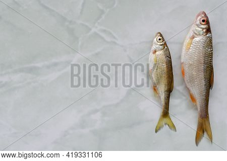 River Fish Roach Lies On The Table. Background