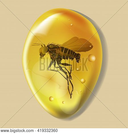 Amber Stone With Insect Isolated On White Background. Mosquito Or Flea Ancient And Modern Insect Fro