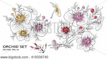 Orchid Vector. Floral Botanical Set Of Flowers Isolated On White Background. Set Of Tropical, Exotic
