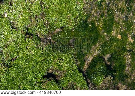 Moss On Stones Over, Under Blue Sea Background.