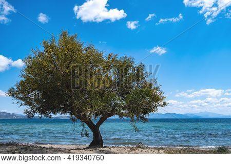 Sandy Beach With Tamarisk, Tamarix Or Salt Cedar Tree. Blue Sky Background.