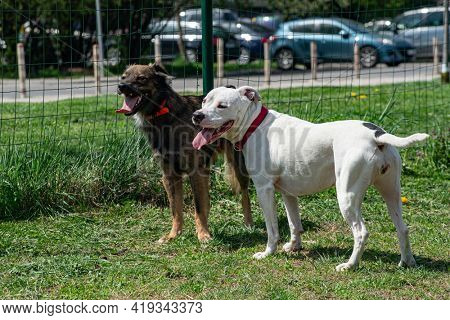 Two tired dog friends are standing together with mouth open, tongue out in an enclosure for pets outdoors.