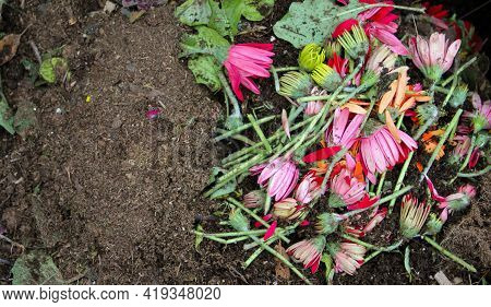 Close-up Of Cut Leaves, Flowers Of Gerbera Pink, Yellow And Orange Color, Piled Pile, Mixed With Dir