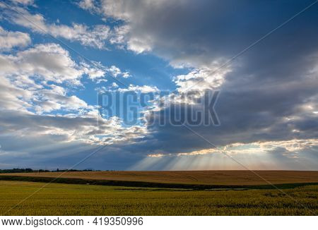 Dramatic Summer Morning  Landscape With Wheat Field In Central Bohemian Uplands, Czech Republic.