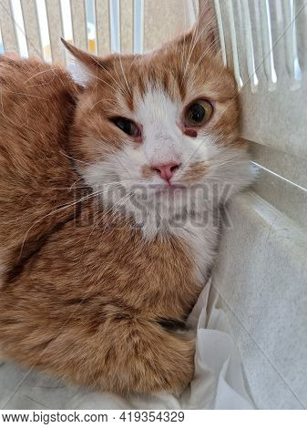 Unhappy Scared Cat In Pet Carrier Close Up