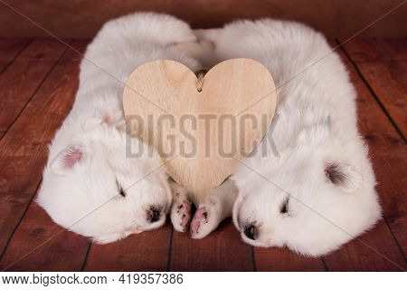 Two Small One Month Old Cute White Samoyed Puppies Dogs With Heart
