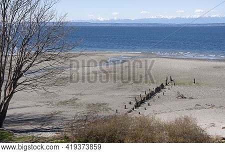 Pacific Northwest Beach Landscape With No People, Rows Of Pilings On The Beach And The Olympic Mount