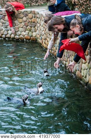 Walsrode, Germany, April 2, 2019: Penguins Swimming In The Pond Fed By People Visiting The Zoo