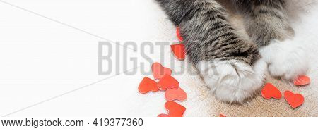 Banner With Cat Paws That Hold Hearts. Place For Your Text. Copy Space. Fluffy Paws.