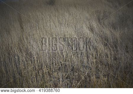 Grassy Tenderness. Selective Focus On Spring Grass. Background