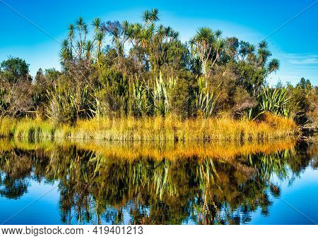 Flax Bushes, Cabbage Trees, Rushes  And Other Vegetation Reflected In The Still Waters Of Okarito La