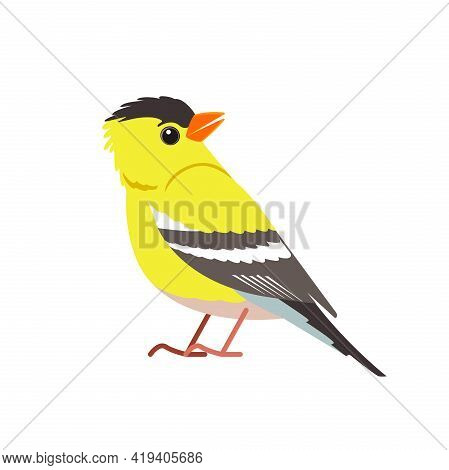 American Goldfinch. Yellow Bird In The Finch Family Cartoon Flat Beautiful Character Of Ornithology,