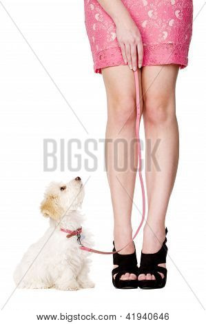 Puppy Sat Looking Up At Woman Wearing A Pink Skirt