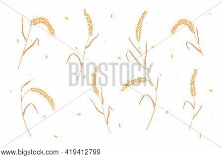 Set Of Dry Wheat Or Rye Grain Ears Flat Style Design Vector Illustration. Whole Bread Cereal Grains