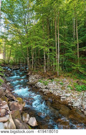 Water Stream In The Beech Forest. Spring Nature Scenery On A Sunny Day. Rapid Creek Flows Among The