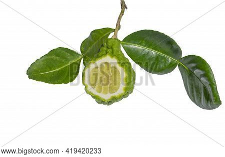 Bergamot Fruit Cut In Half With Leaves And Stalks On White Background, Cutting Path.
