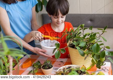 Boy Helps Mom To Take Care Of House Plants, Child Transplants Flowers, Woman Teaches Son To Take Car