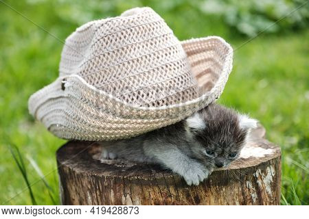 Kitten Under Hat. Two Kittens Playing On A Stump.