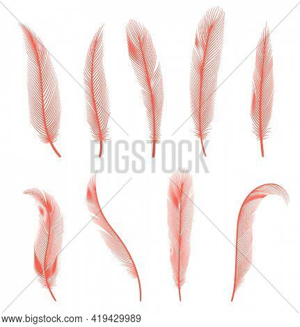 Coral detailed feathers of bird collection.  decorative fluffy pink feathers of flamingo or goose. Set plume icon isolated on white background