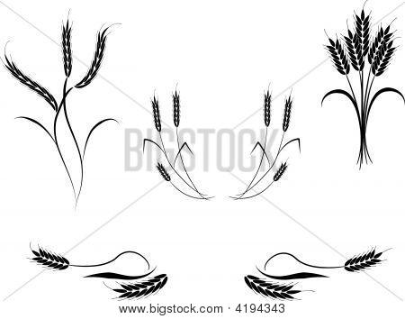 Wheat.Eps
