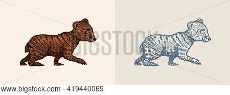 Grizzly Little Bear In Vintage Style. Brown Wild Animal. Side View. Hand Drawn Engraved Old Sketch F