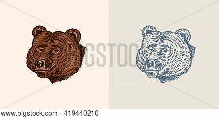 Brown Grizzly Bear, Wild Animal. Vintage Monochrome Style. Engraved Hand Drawn Sketch For Banner Or