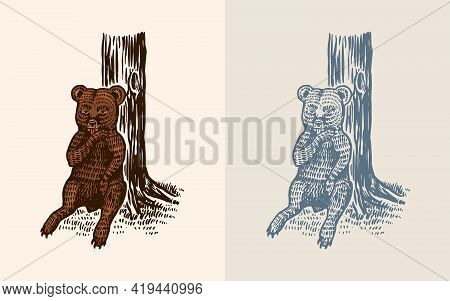 Grizzly Little Bear In Vintage Style. Wild Animal. The Kid Of The Beast Sits At The Tree And Licks T