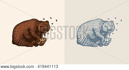 Grizzly Brown Bear Eats Honey. In A Wild Animal In The Paw A Beehive With Bees. Side View. Hand Draw