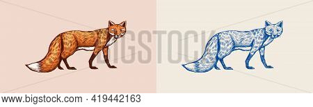 The Fox Looks Away. Forest Red Animal Or Ginger Beast. Vector Engraved Hand Drawn Vintage Sketch For