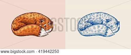 The Fox Is Sleeping. Red Animal With Fluffy Tail. Forest Ginger Beast. Curled Up. Vector Engraved Ha